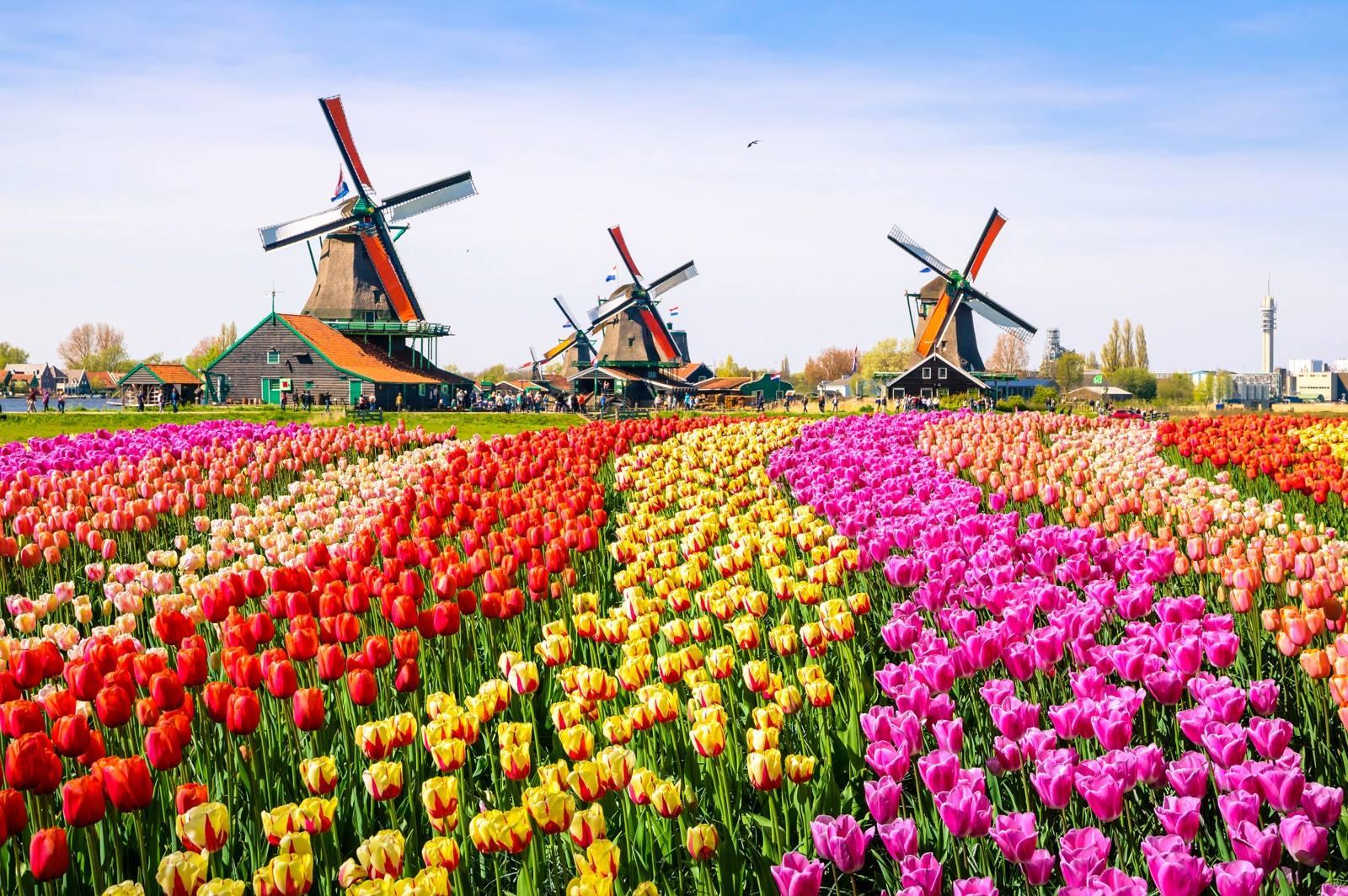 HollandWoont